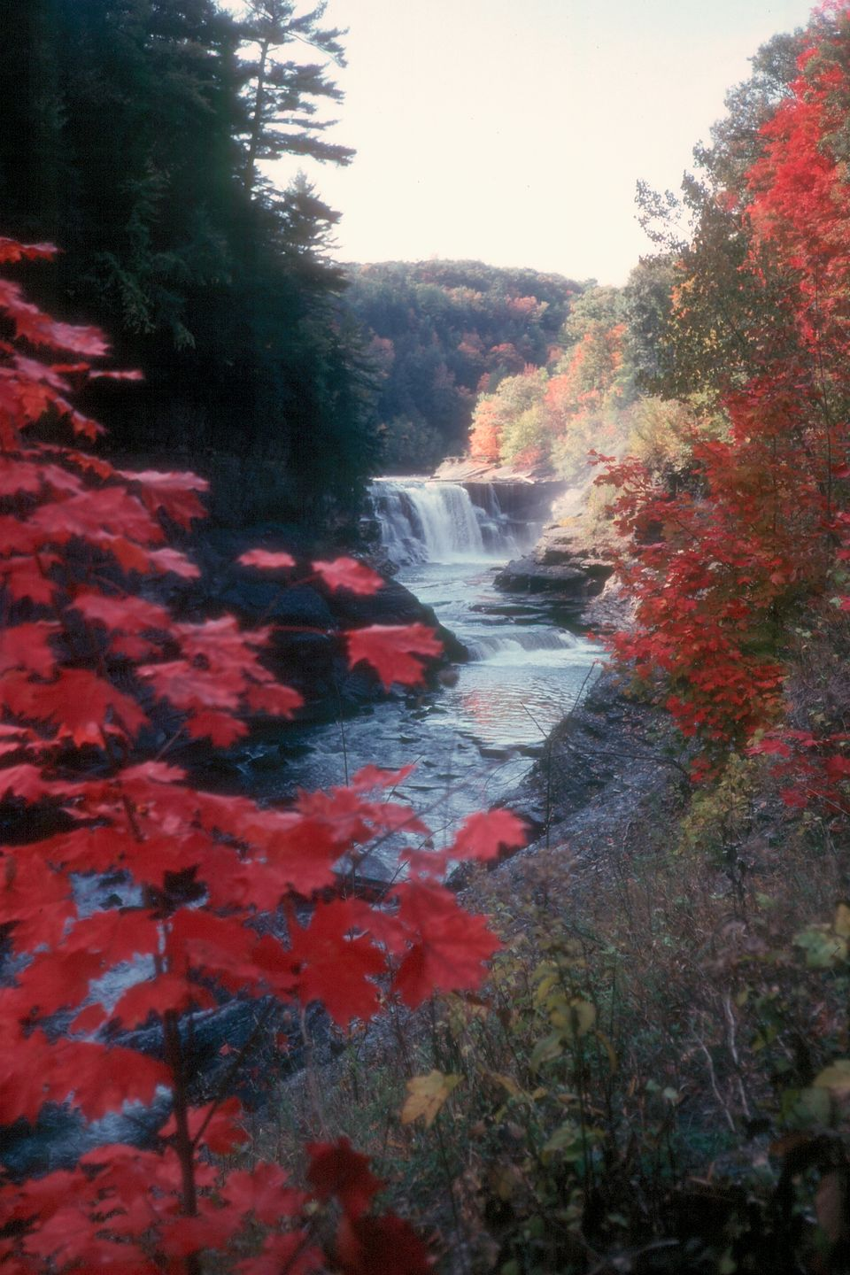 Letchworth falls and leaves