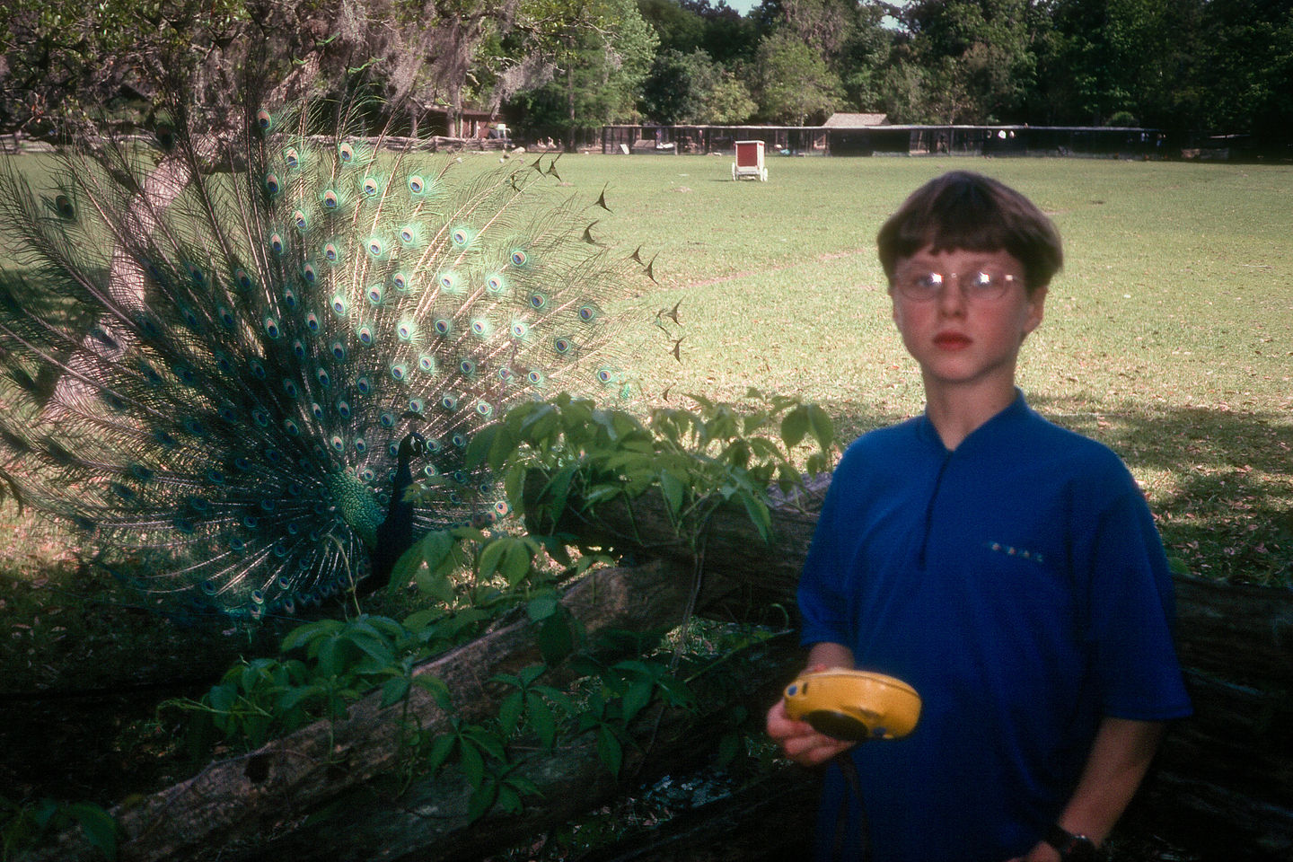 Tommy with peacock
