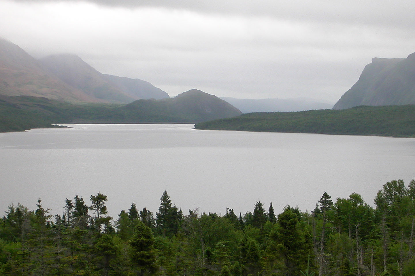 Trout River Pond in the mist
