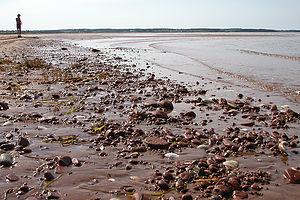 Rustico Bay Beach