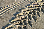 Tractor tracks for beachside camping