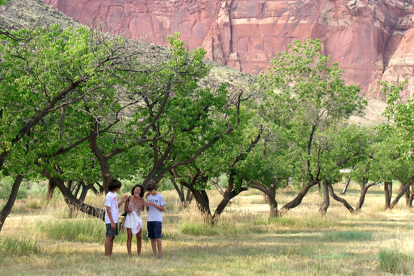 Lolo and the boys picking apricots