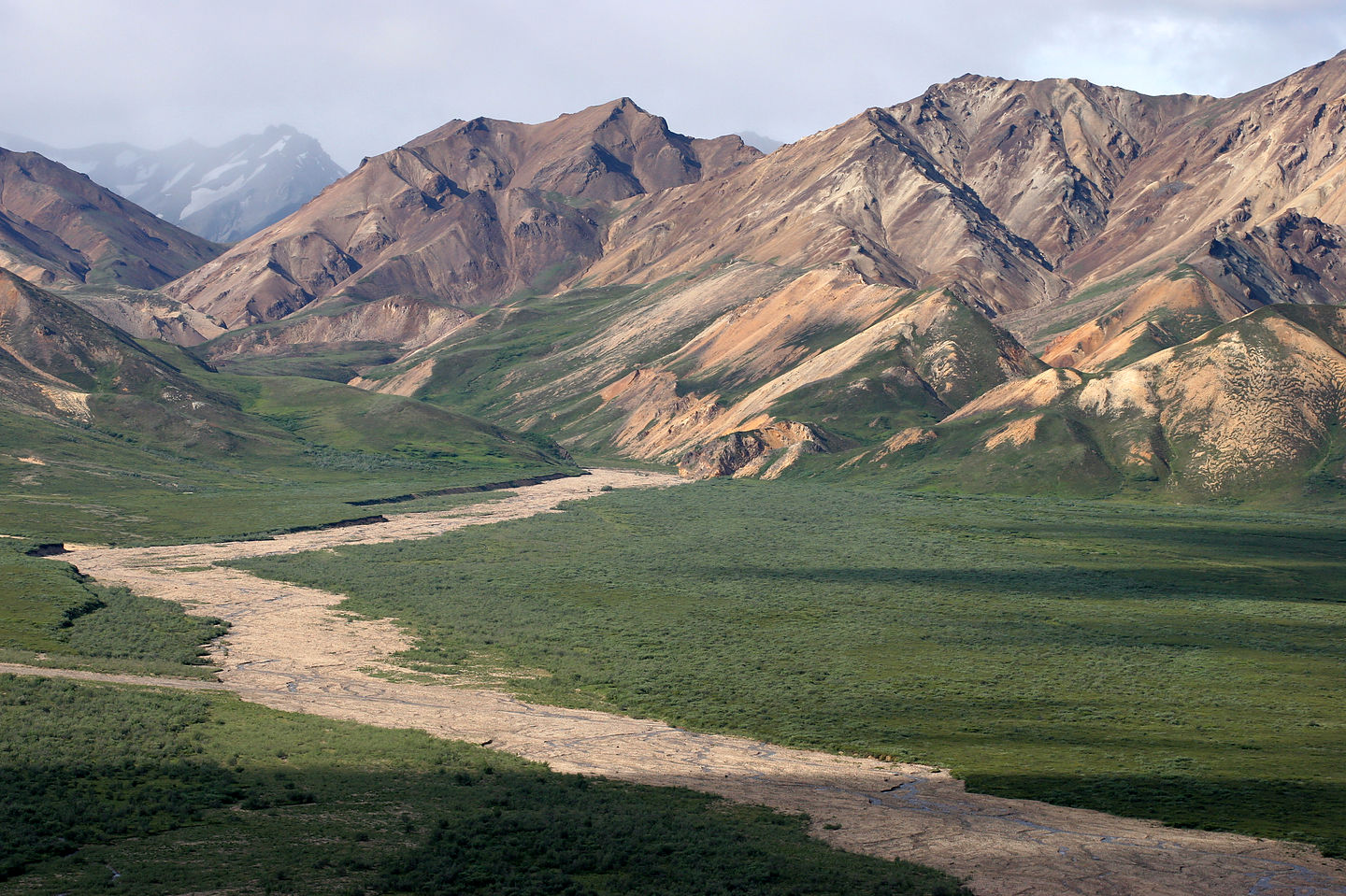 Denali tour mountains