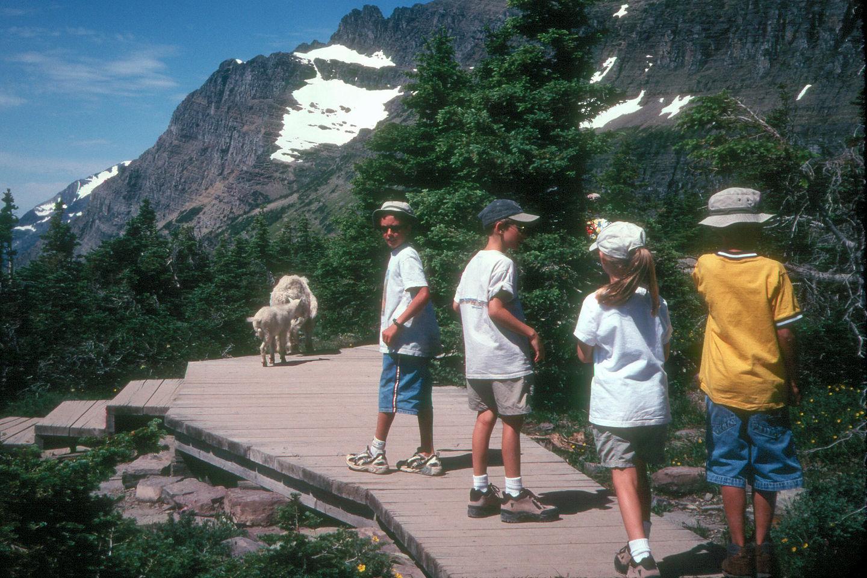 Kids hiking on Hidden Lake Trail