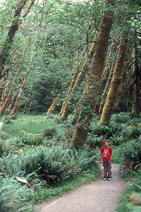 Andrew in Rain Forest