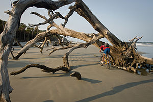 Andrew biking under tree on beach