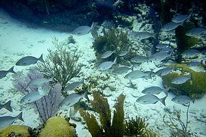 Small school of reef fish - TJG
