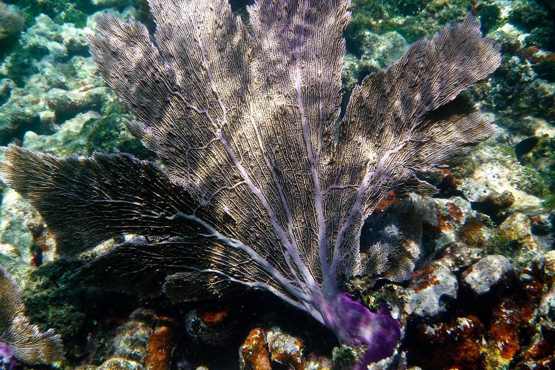 Underwater Fern - TJG