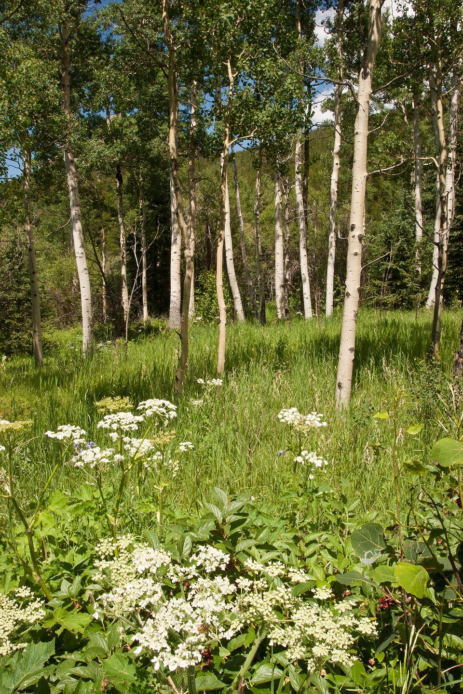 Raccoon Loop Trail view