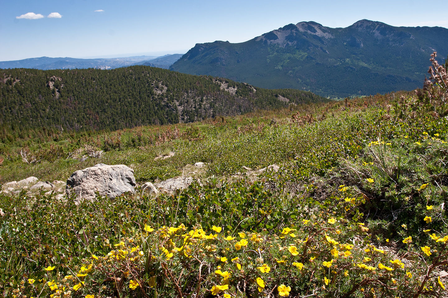 Meadow view on Chasm Lake hike