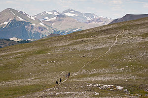 Trail hiking back from Mt. Ida