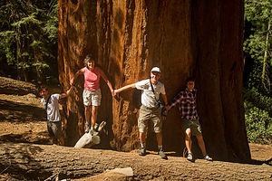 Sequoia Tree Huggers