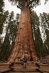 Tommy with General Sherman Tree