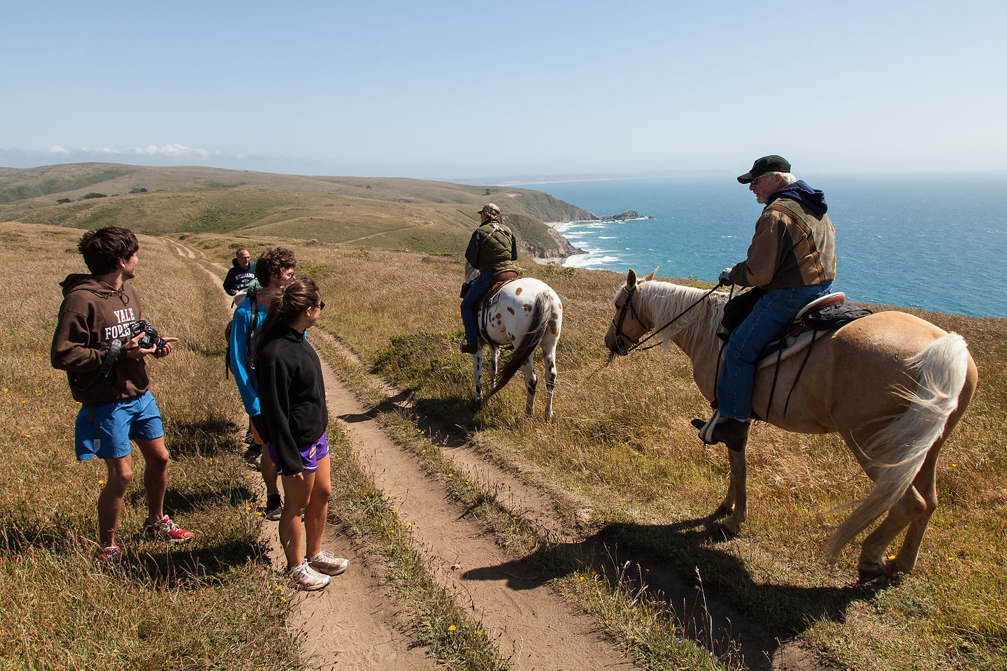 Horses on Tomales Point Trail