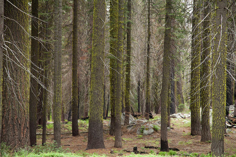 Leaving Yosemite Valley