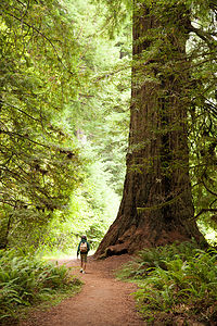 Hiking Big Tree Loop in Prairie Creek Redwoods State Park