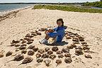 Horseshoe Crab Circle with Lolo