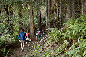 Pomo Canyon / Red Hill loop trail Hike
