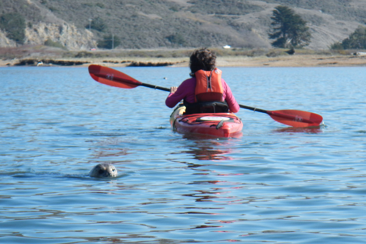 Lolo Kayaking with Seal