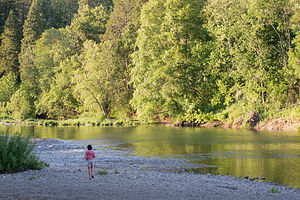 Lolo on South Umpqua River in Stanton Park