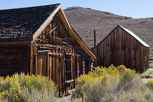 Bodie Buildings with Yellow Flowers