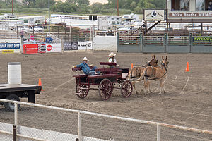 Mule Days Competition