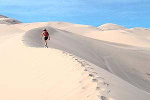 Lolo on Eureka Dunes