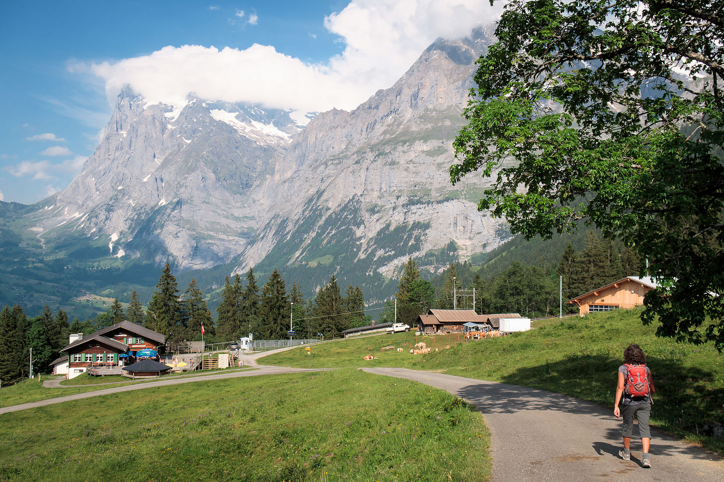 Hiking down to Grindelwald
