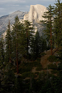 Half Dome and pine trees from 4-mile trail