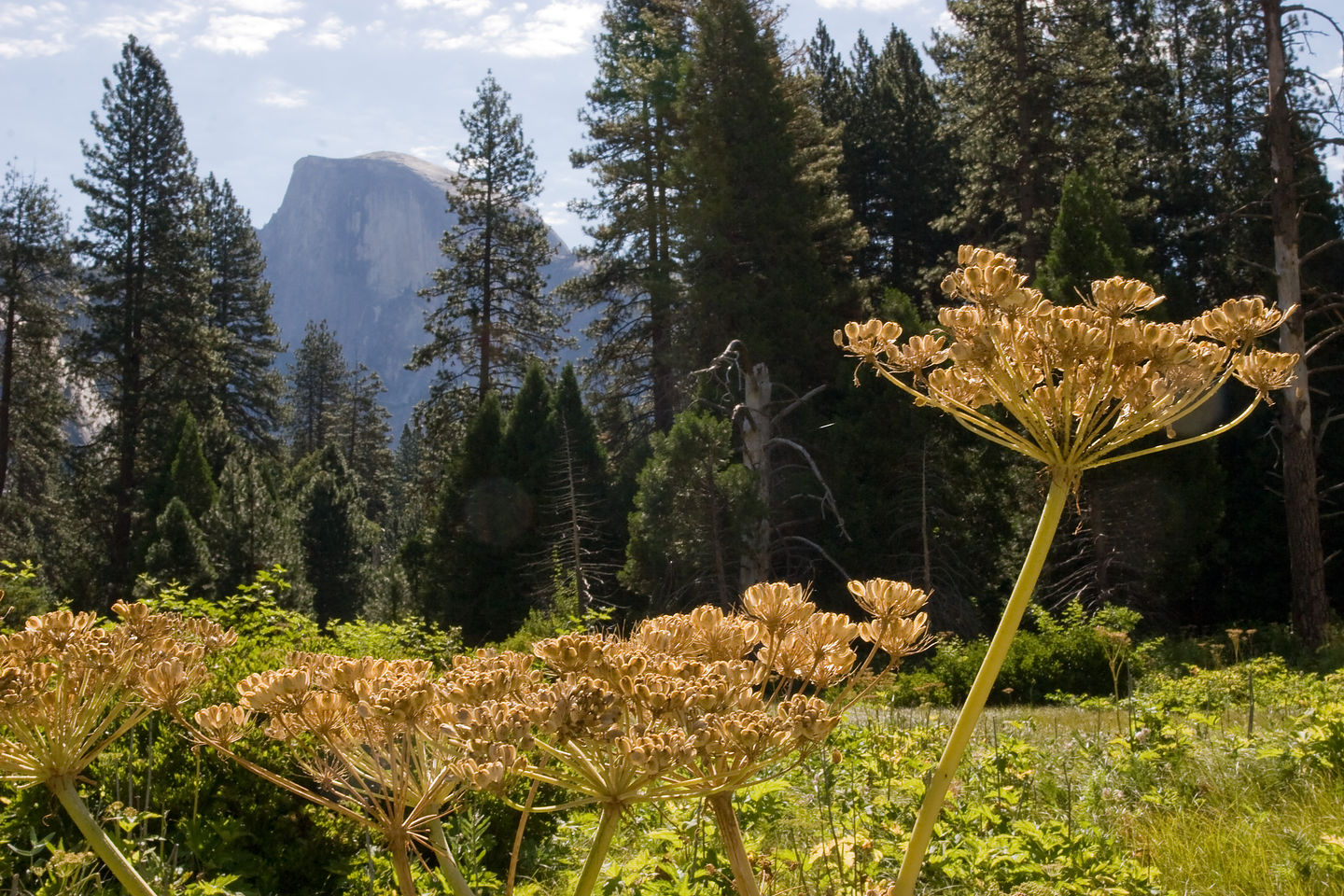 Half Dome with flowers