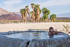 Palm Oasis shady pool