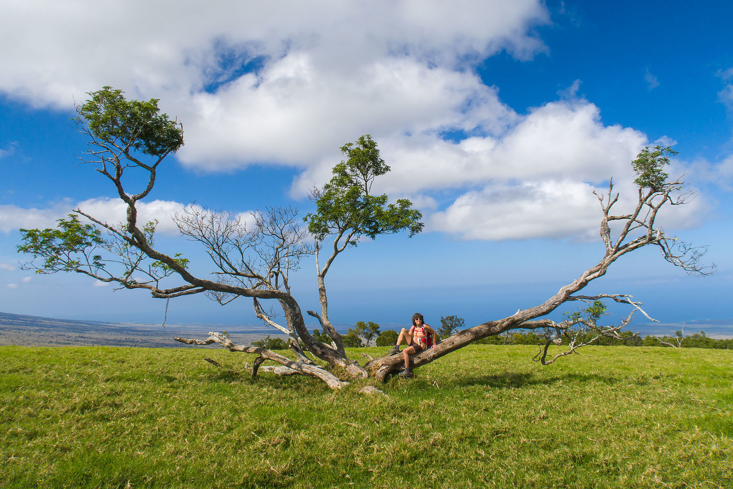 Interesting tree on Pu'u Wa'awa'a summit