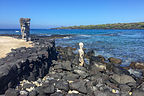 Vigilant gods gazing out to sea
