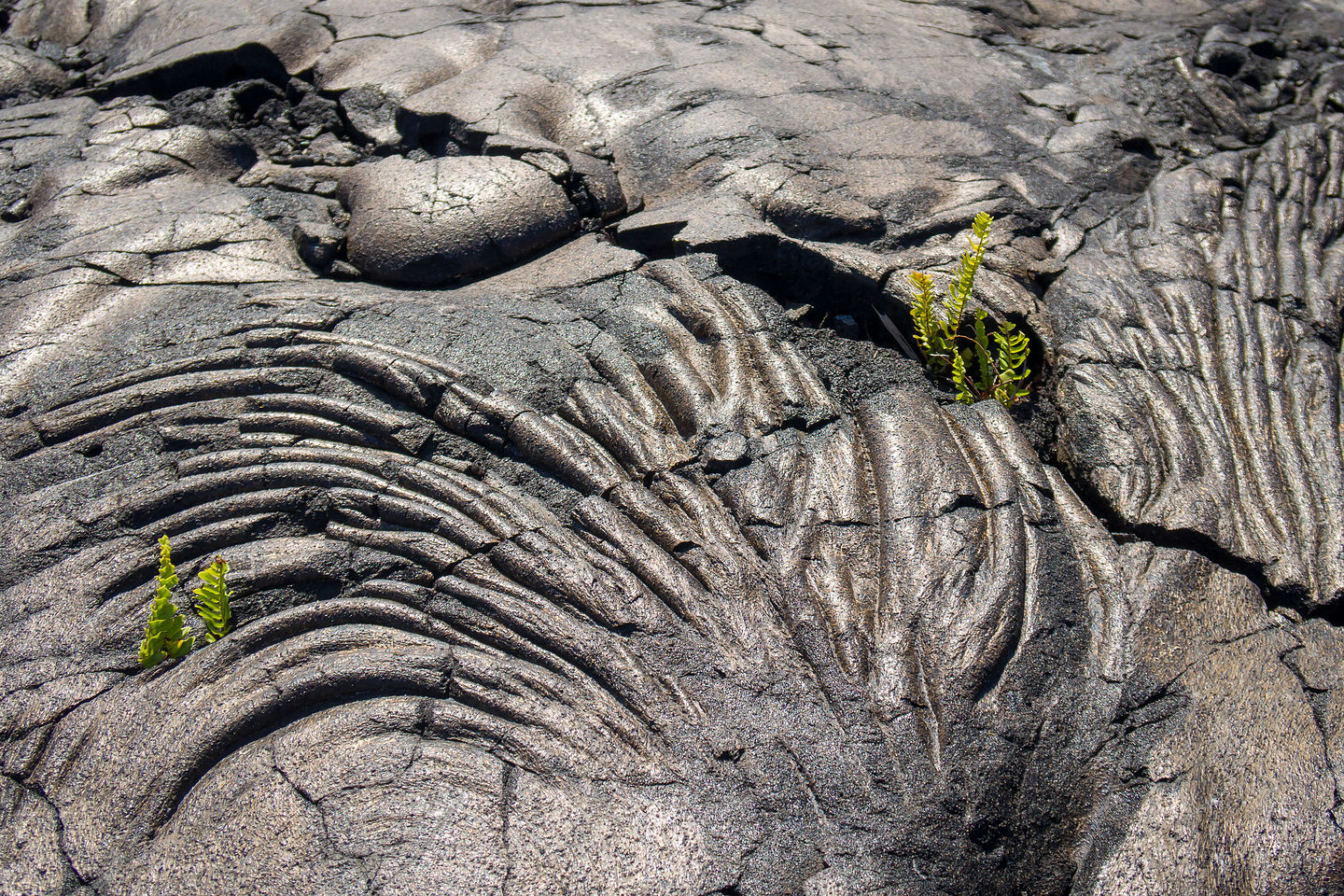 Pahoehoe lava at the end of Chain of Craters Road