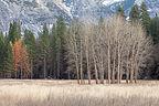 The barren trees of winter