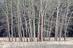 Lovely trees of winter