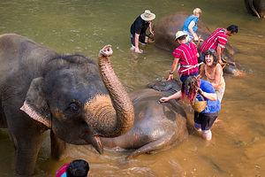 Lolo bathing the elephants