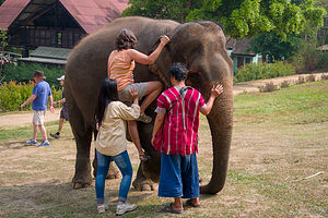 Lolo mounting her pachyderm
