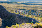 Lolo on Panum Crater Trail
