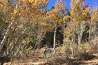 Foliage along the Virginia Lakes Trail