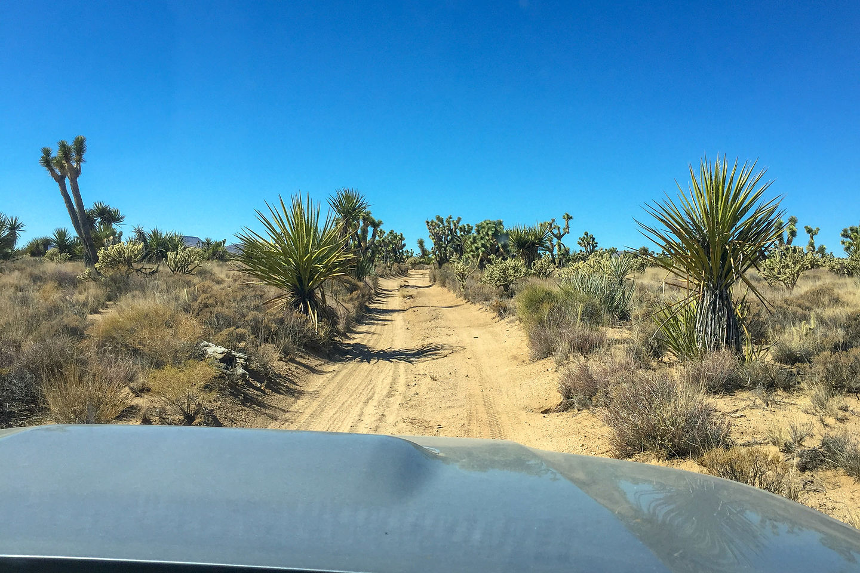 Joshua trees along the Mojave Road