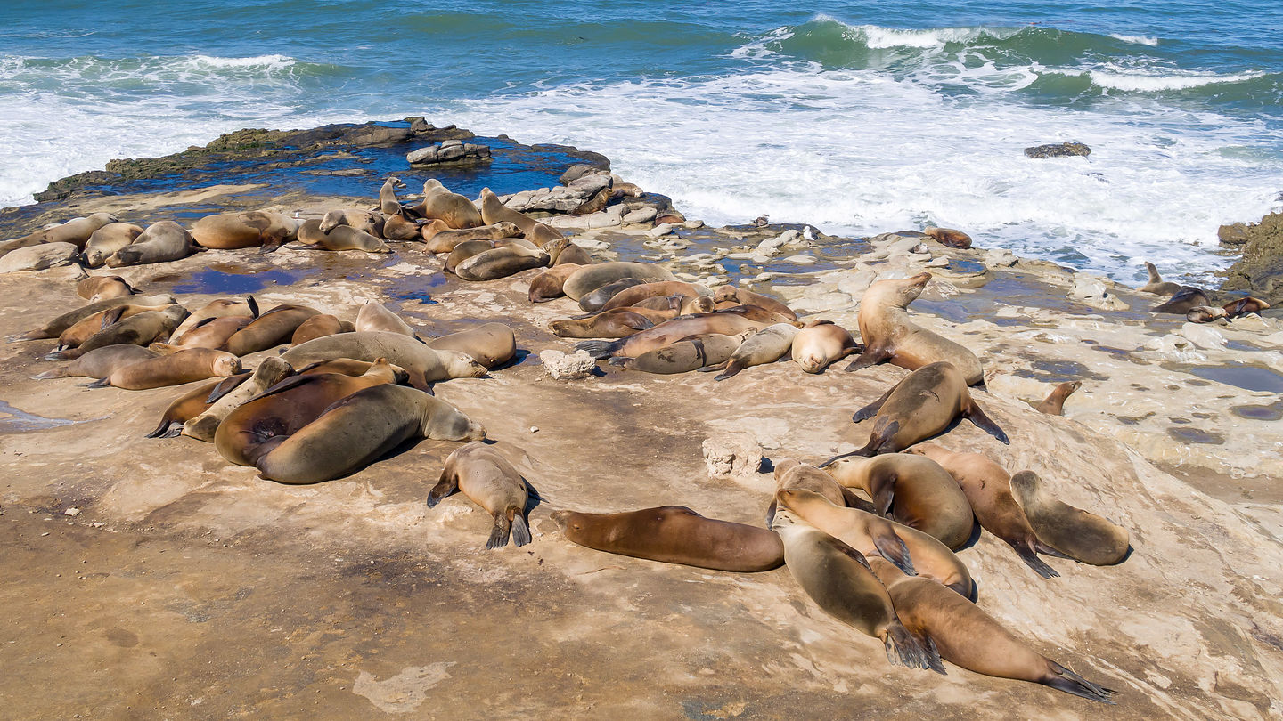 The good life for a Lo Jolla sea lion