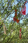 Thongs in the Trees