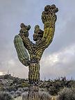 Anatomically correct cactus