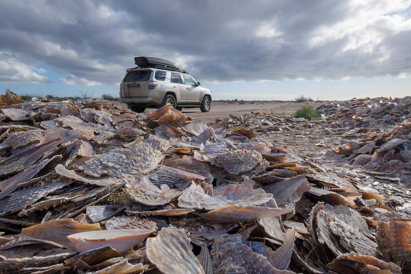 Pile of shells on road to Kuyima Eco Tour camp