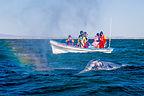 Rainbow whale spout