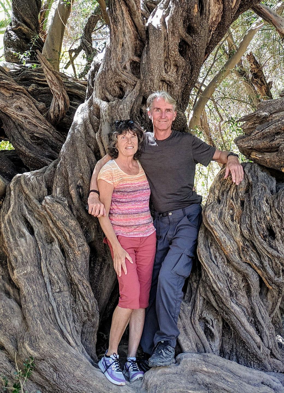 315-year-old olive tree (plus us)