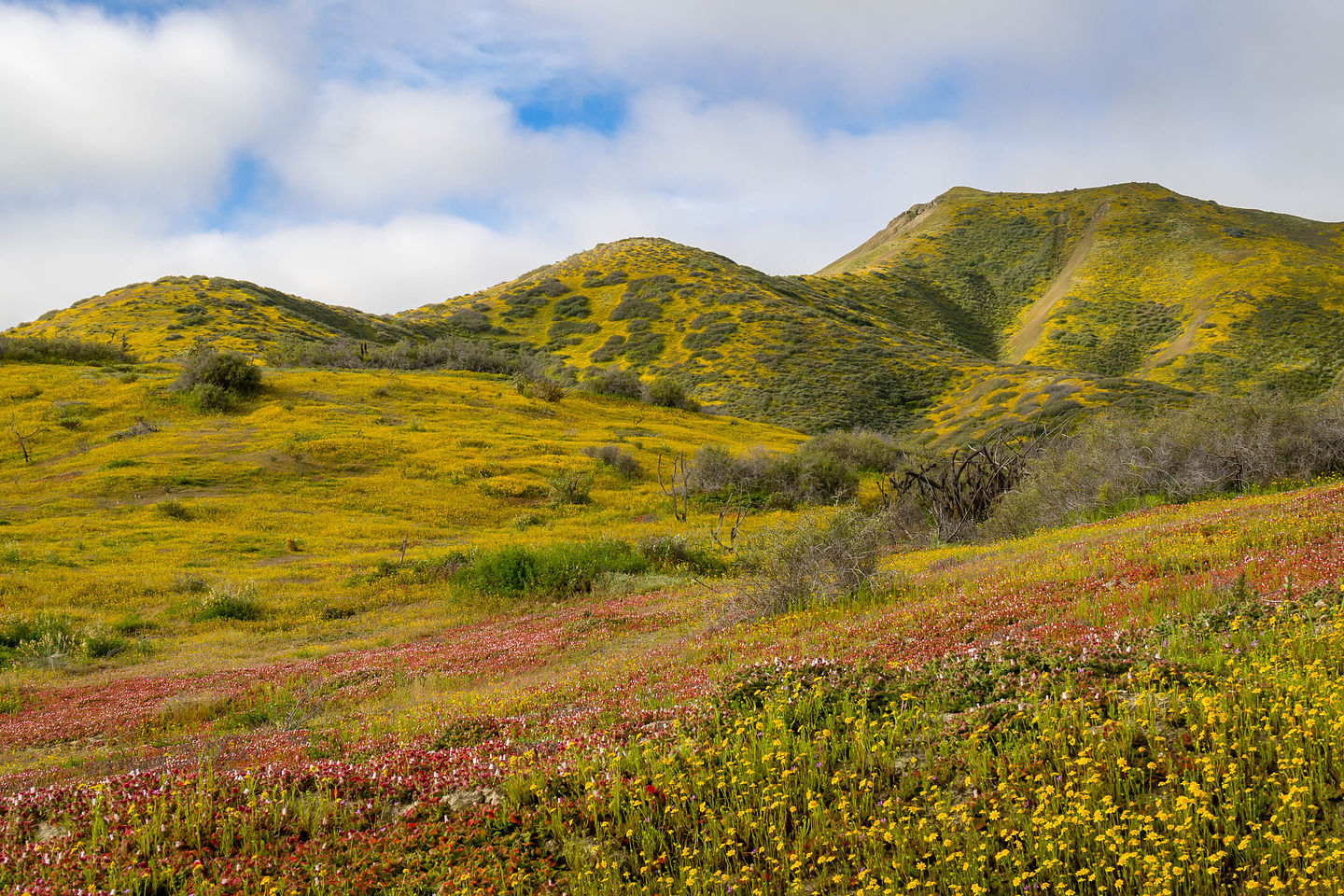 Wildflower bloom along Mexico 1
