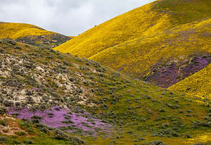 The colored hills of Carrizo Plains