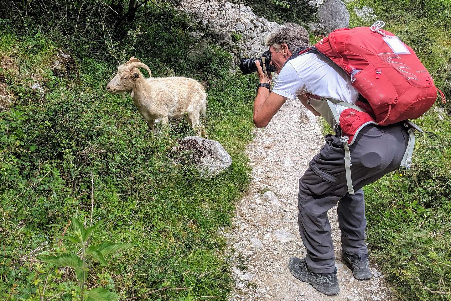 He took more pictures of that goat than me on this trip